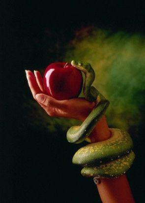 Snake and Forbidden Fruit